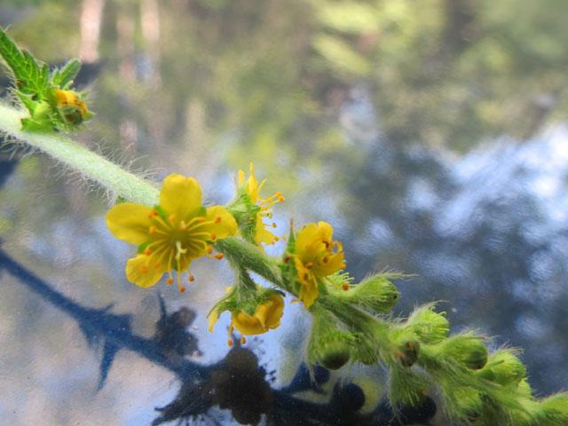 DEGUS INTERNATIONAL COMMUNITY • View topic - Plant Identification ...