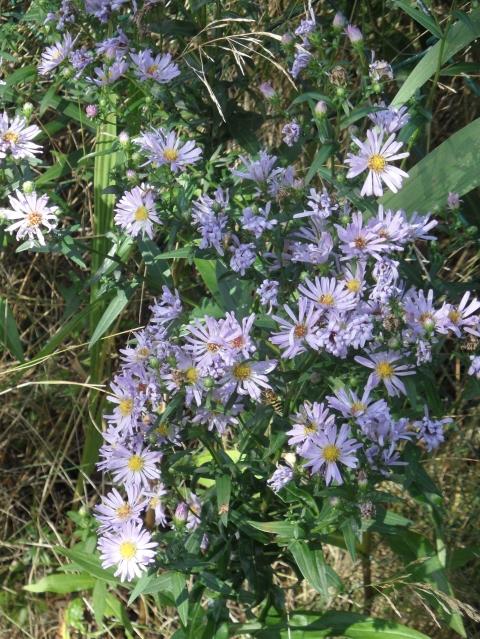 DEGUS INTERNATIONAL COMMUNITY • View topic - Pflanze der Woche